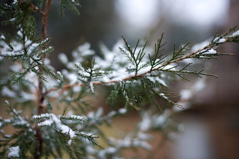 Snow OnBranch